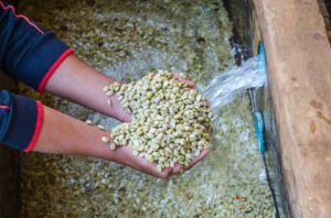 Beer and Wine are Fermented – So is Coffee!